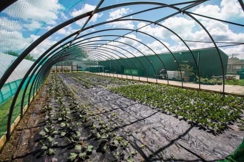 38 - The Clink Gardens at HMP Send, Surrey