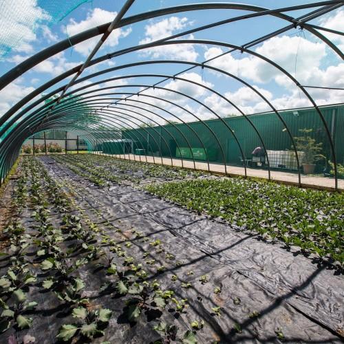 Seasonal crops at The Clink Gardens at HMP Send